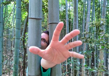 JapaStory #01: Příběh jednoho bambusu
